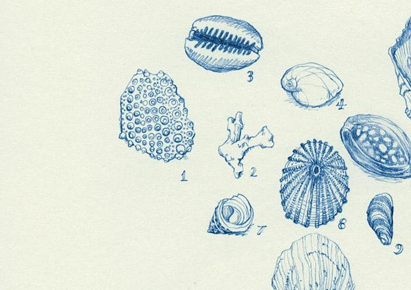 big-island-shells001-adjdet.jpg