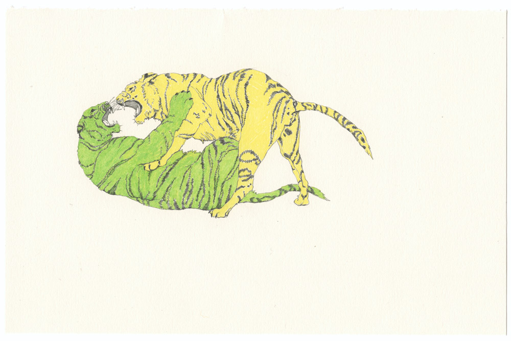 fighting-tigers-color001.jpg
