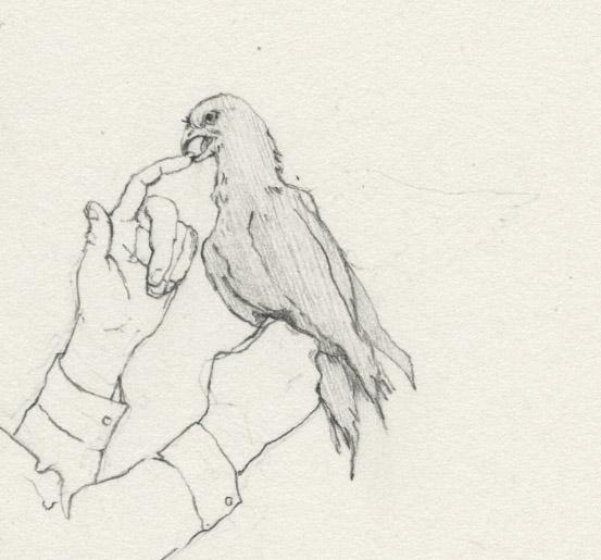port-parrot001-det.jpg
