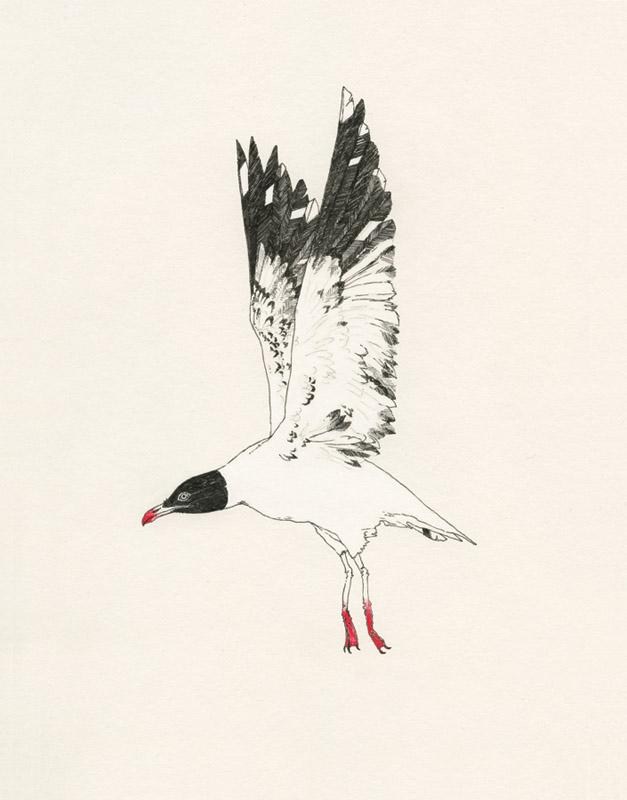 waste-gull.jpg